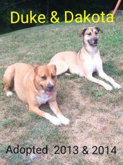Duke&dakota