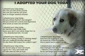 i-adopted-your-dog-today