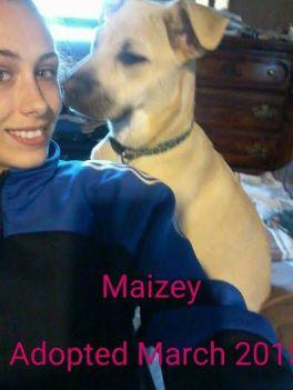 Maizey